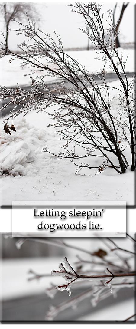 Sleeping_dogs_lie